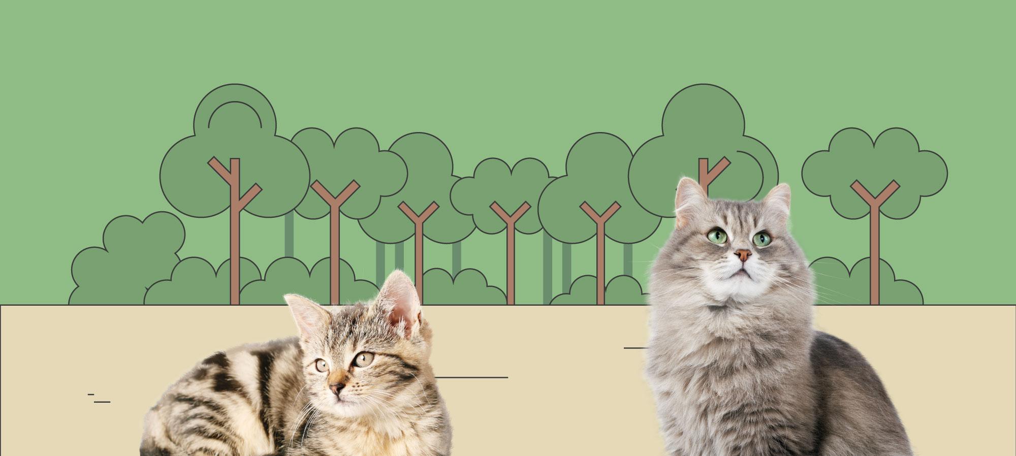 kattenbos